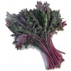 Chou Kale rouge (botte)