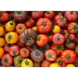 Tomate pour sauce (5 kg)