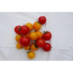 Tomate cerise (250g)