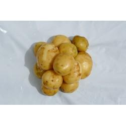 Pomme de terre (500g)